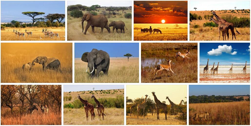 Wildlife in Africa 2